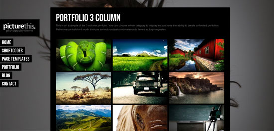 portofolio website templates